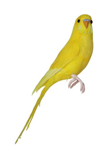 Gul-kanariefugl-fra-Puebco