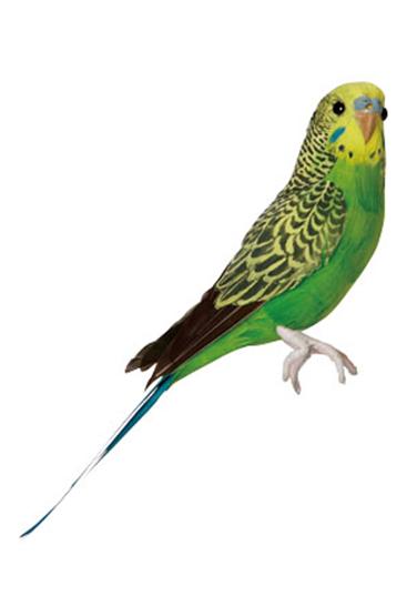 Groen-undulat-fra-Puebco