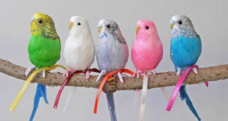 Puebco-fugle-paa-gren