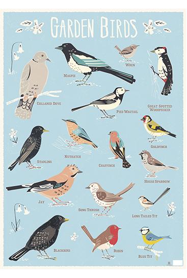 Birds-wrap FLAT_100414