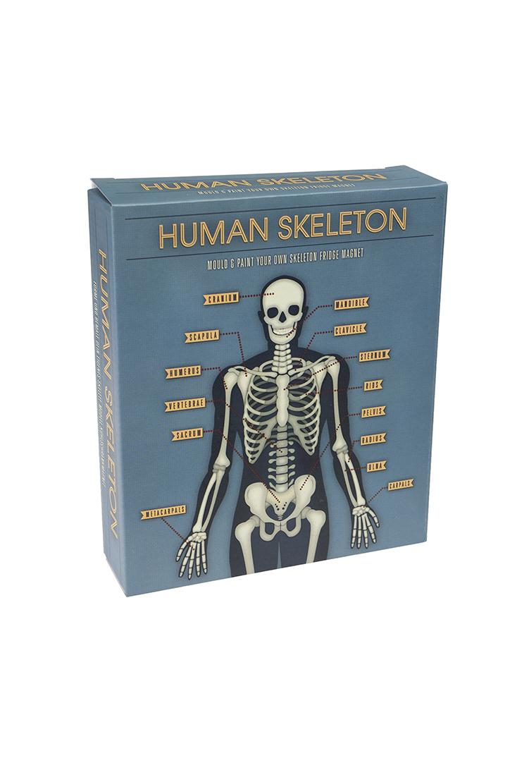 skelet-selvlysende