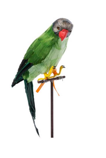 Papegoeje-groen-paa-pind