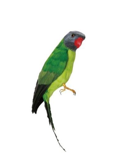 Papegoeje-groen-fra-Puebco