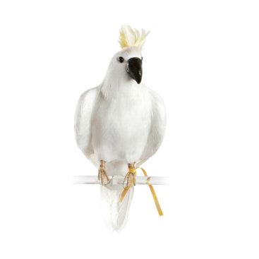 Stor-hvid-kakadue-fra-Puebco