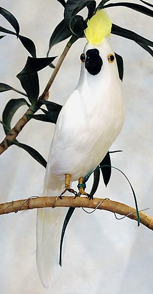 Kakadue-paa-pind