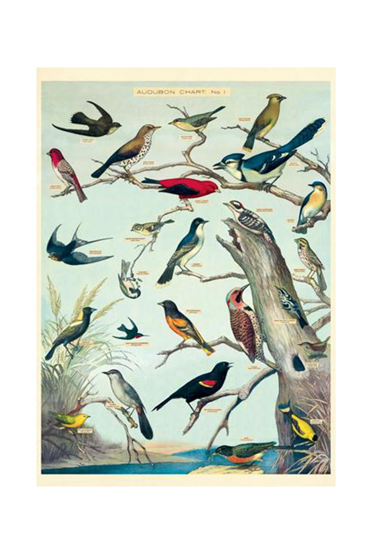 audubon-birds-wrap