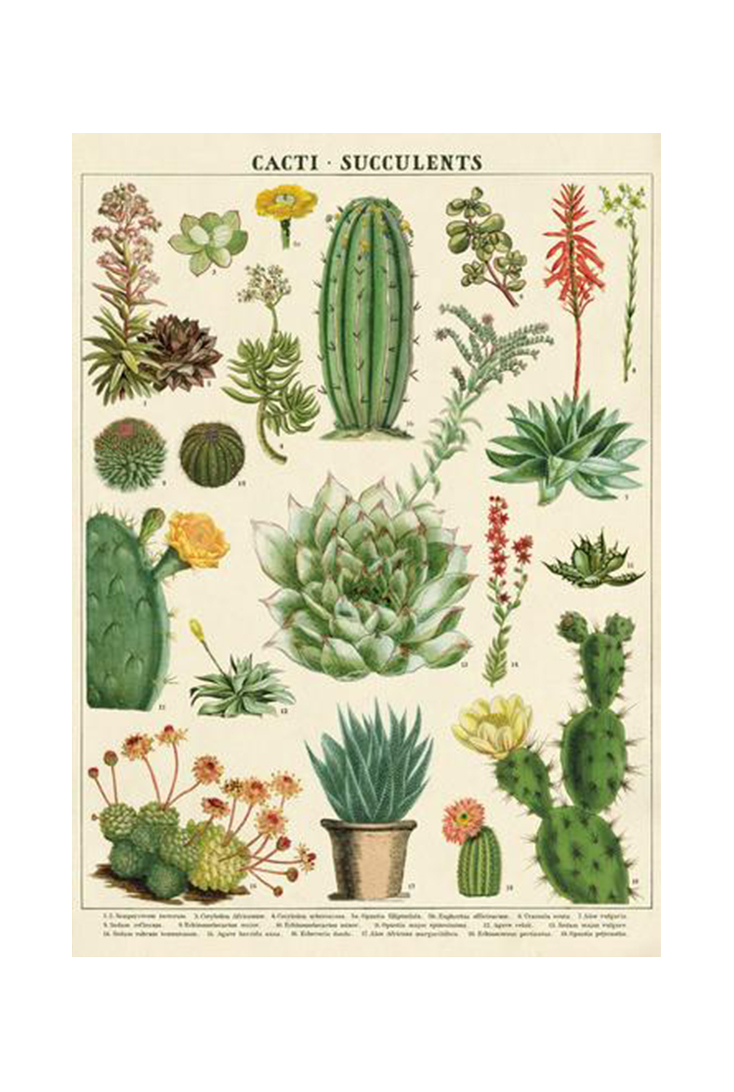 cacti-wrap