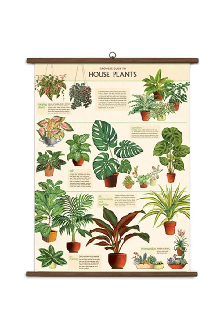 house-plant-school