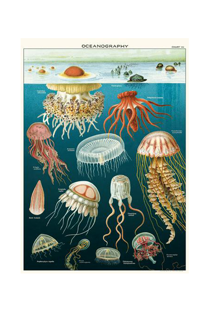 jellyfish-wrap