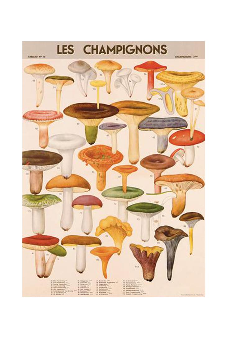 mushroom-wrap