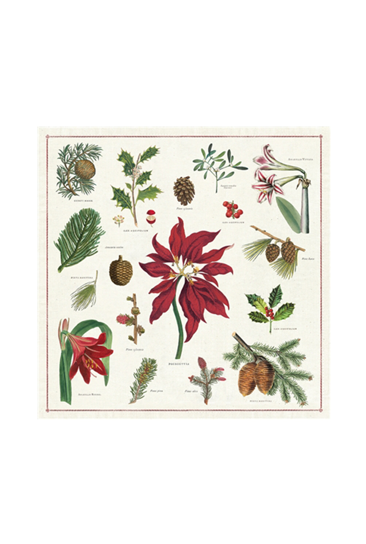npkn-botanica-christmas