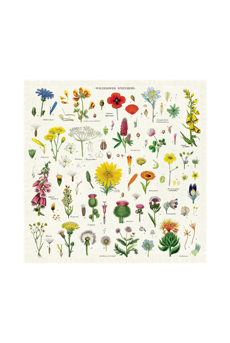npkn-wildflowers