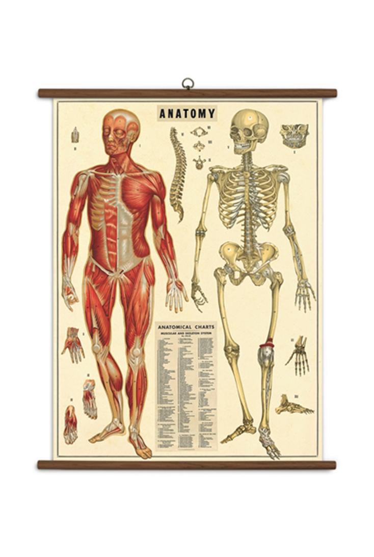 school-anatomy