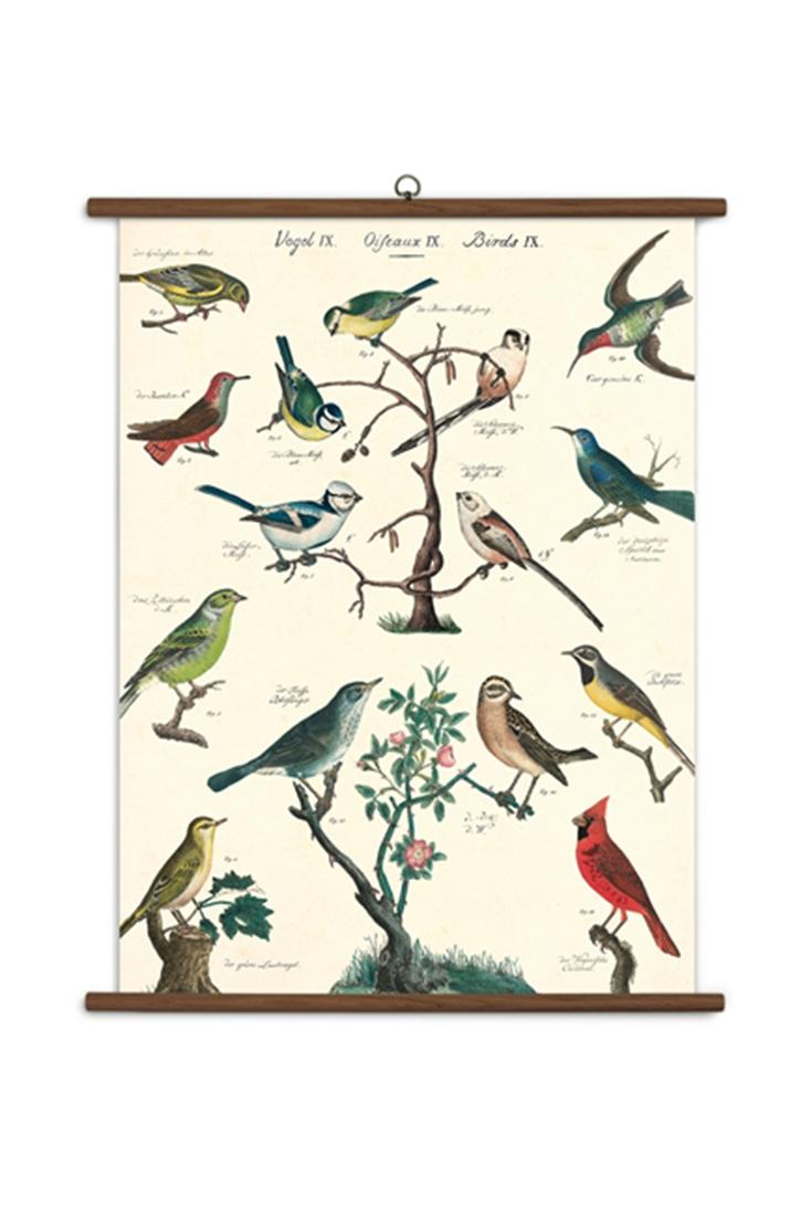 school-bird
