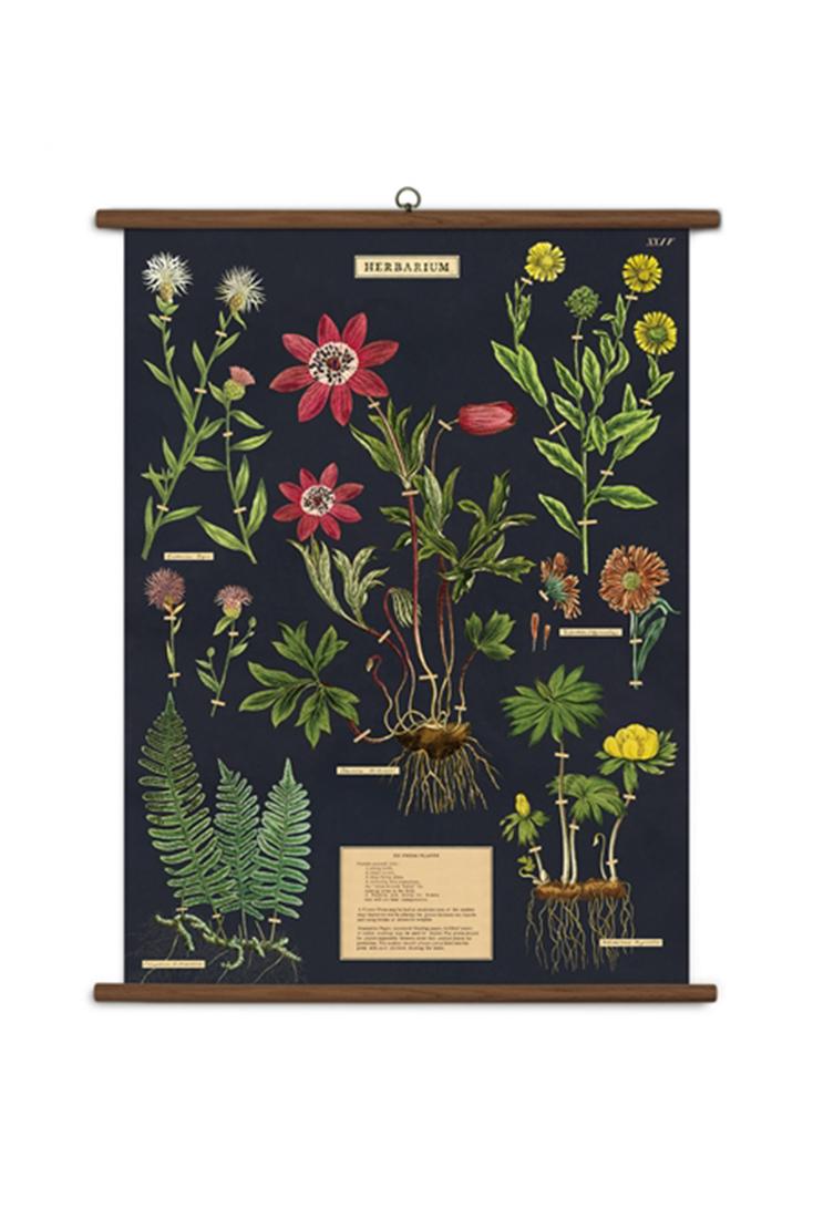 school-herbarium