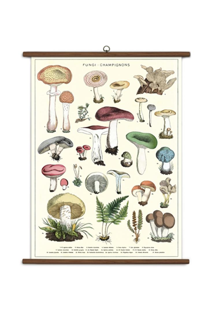 school-mushroom