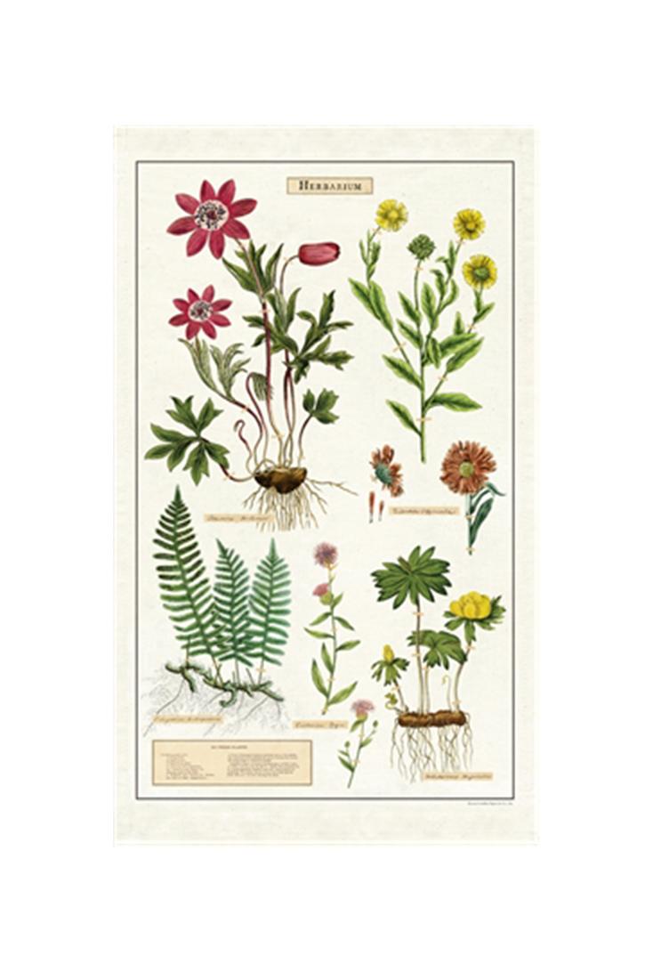 tt-herbarium