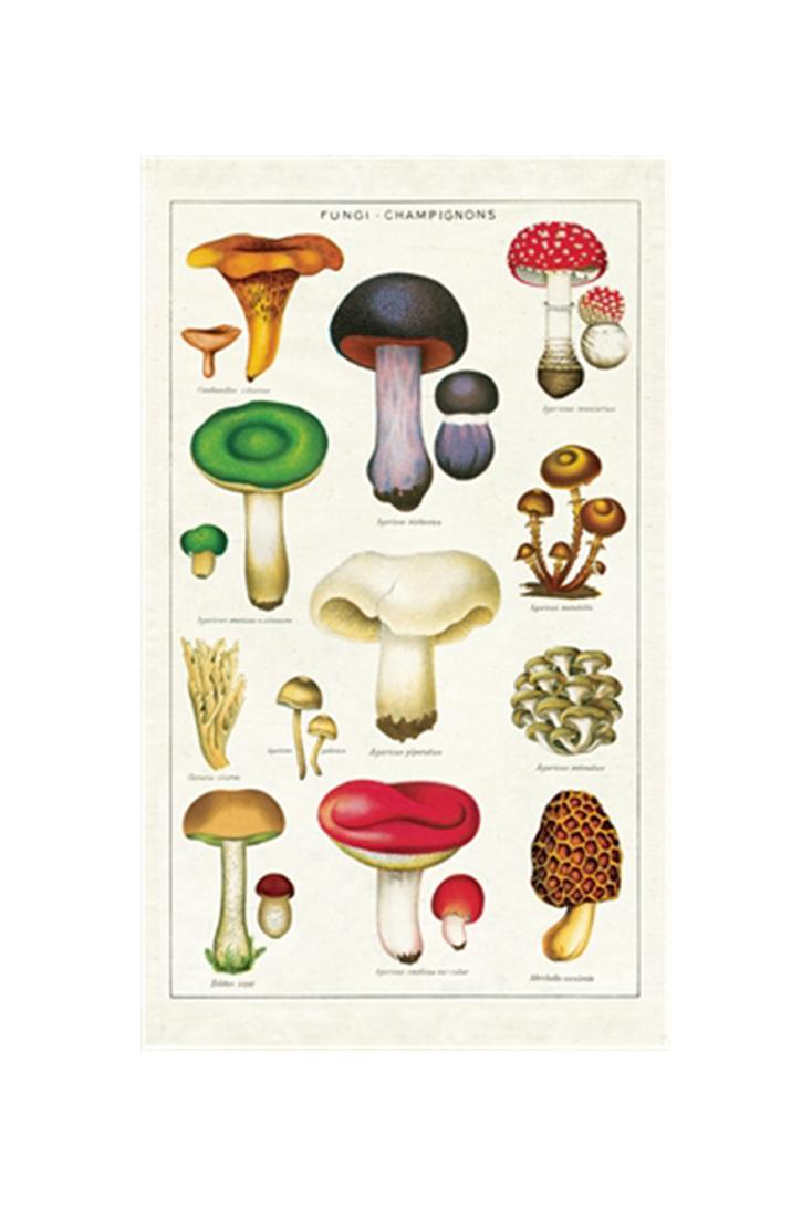 tt-mushroom