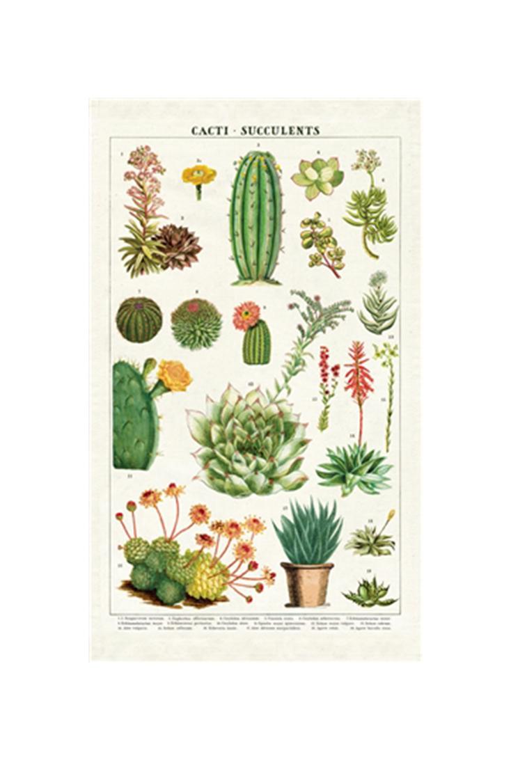 tt-succulents