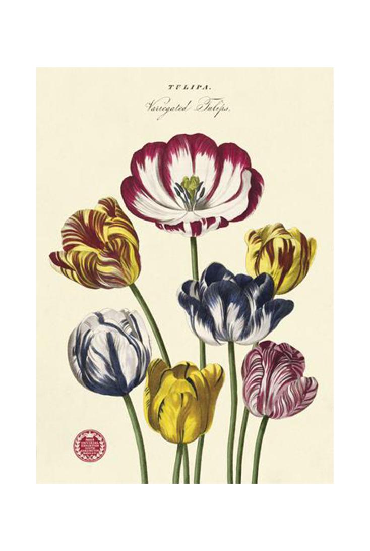 tulips-wrap