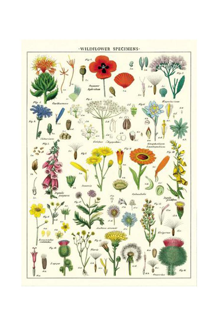 wildflowers-wrap