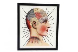 TJ1042EUNA-skilt-phrenology